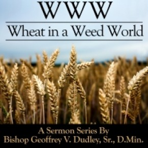 WWW: Wheat in a Weed World 4-CD Series